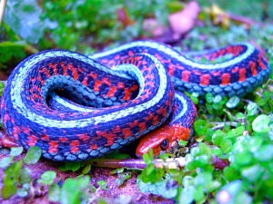 Snakes May Carry A Divine Message Within Your Dreams – i speak in dreams