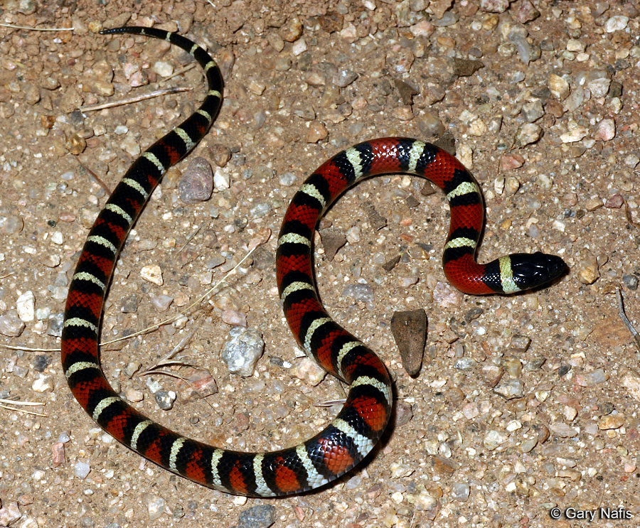 Snakes May Carry A Divine Message Within Your Dreams – i